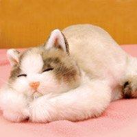 猫ゆたんぽ