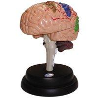 「猿の惑星」が実現する!?人の脳を動物へ移植可能に