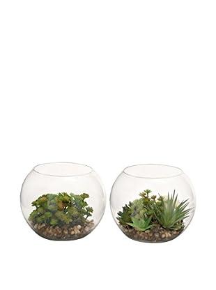 Set of 2 Tall Faux Terrarium Succulents