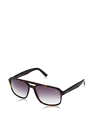 Web Gafas de Sol WE0131 (60 mm) Havana