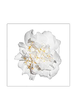 Art Addiction White Floral On White VI Artwork on Acrylic