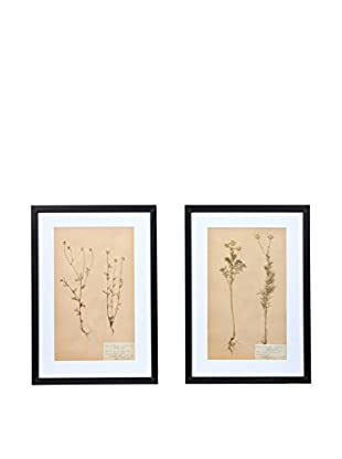 Pair of Framed Herbarium XXIII Artwork, Natural/White/Black