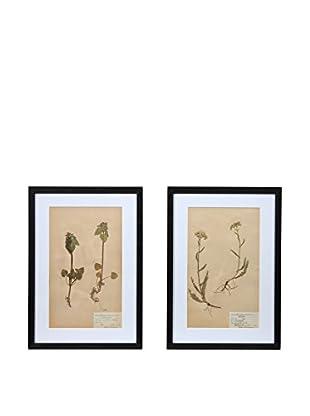 Pair of Framed Herbarium I Artwork, Natural/White/Black