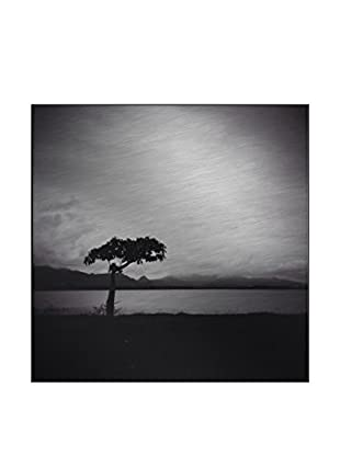 Lonely Tree Photography On Mounted Metal