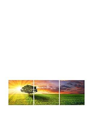 SuperStudio Leinwandbild 3 tlg. Set Tree Colore