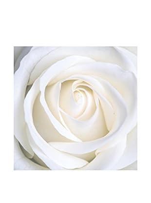 LegendArte  Wandbild Weiße Rosa