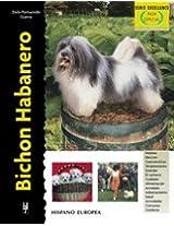Bichon Habanero / Bichon Havanese (Excellence)