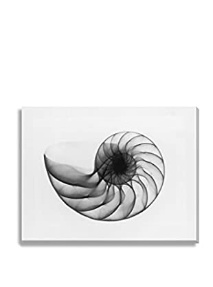 Photos.Com By Getty Images X-Ray Nautilus Shell By Edward Charles Le Grice On Canvas