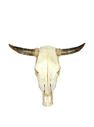 Uptown Down Found Steer Skull with Horns, Brown/White