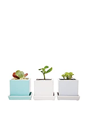 Chive Set of 3 Cubes & Saucers, Mint/White/Ice Blue