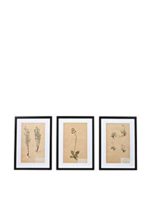 Set of 3 Framed Herbarium Artwork, Natural/White/Black