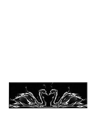 Wallity Cisne Negro