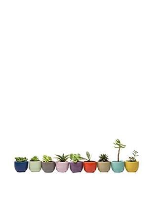Chive Set of 9 Petite Succulent Cup Planters, Multi