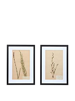 Pair of Framed Herbarium XXVI Artwork, Natural/White/Black
