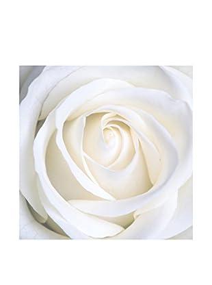 Legendarte Leinwandbild Rosa Bianca