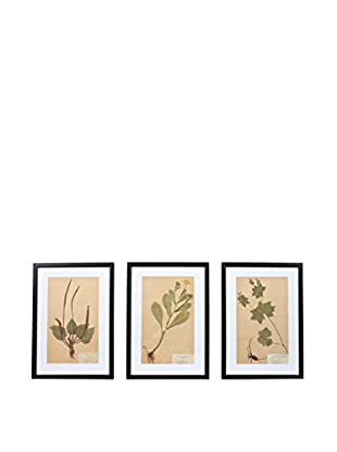 Set of 3 Framed Herbarium II Artwork, Natural/White/Black