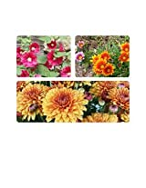 Combo of J.K. Agro Chrysanthemum + Hollyhock + Gazania Flower Seeds