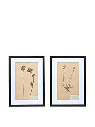 Pair of Framed Herbarium XXI Artwork, Natural/White/Black