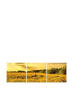 LO+DEMODA Leinwandbild 3 tlg. Set Wheat Field
