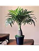 Ginni Bloom Artificial Bonsai Palm Tree