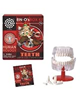 EIN-O's Science Human Biology Assortment by Tedco (Select=123:Teeth)