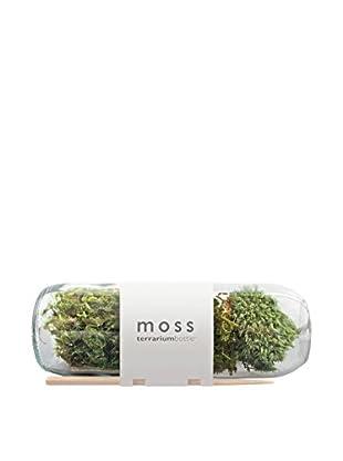 bambeco Moss Terrarium Bottle