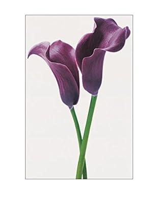 Artopweb Wandbild Pueple Calla Lilies