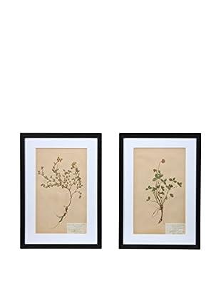 Pair of Framed Herbarium VII Artwork, Natural/White/Black