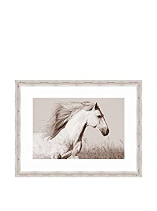 Surya Horse Photography, Multi, 38