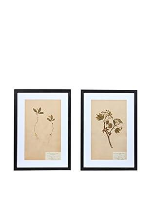 Pair of Framed Herbarium XXVIII Artwork, Natural/White/Black