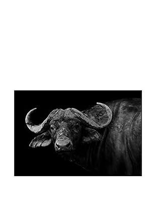 BuffaloPhotography On Mounted Metal