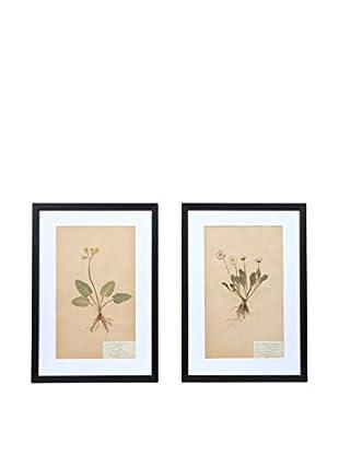 Pair of Framed Herbarium XXV Artwork, Natural/White/Black