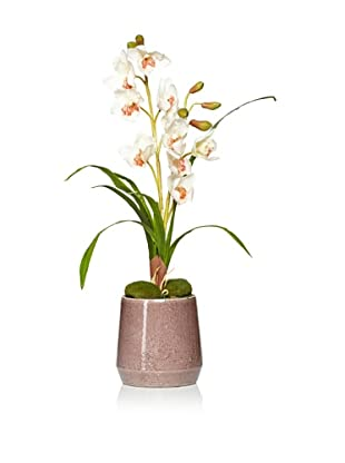 Laura Ashley Faux Orchid in Ceramic Container (White)
