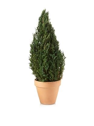 Forever Green Art Juniper Cone Topiary