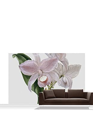 Victoria and Albert Museum Orchid, Cattelya Skinerii Mural, Standard, 12' x 8'
