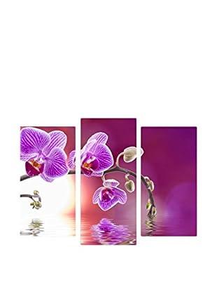 Wallity Orquídea