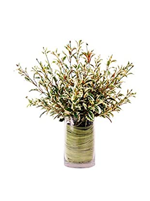 Creative Displays Variegated Rosemary in Grass Twine Glass Container, Green