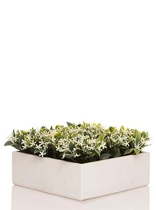 Concoral Concobox Flor Silvestre Crema
