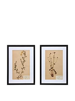 Pair of Framed Herbarium VIII Artwork, Natural/White/Black