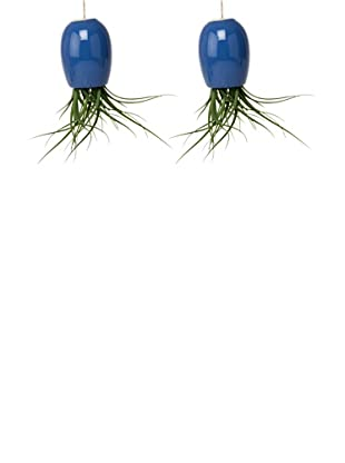 Chive Set of 2 Blue Large Plant Shades