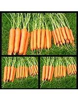 J.K. Agro Vegetable Seed Carrot (pack of 3)