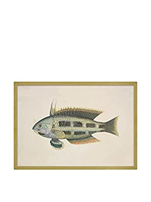 Really Nice Things Wandbild Fish