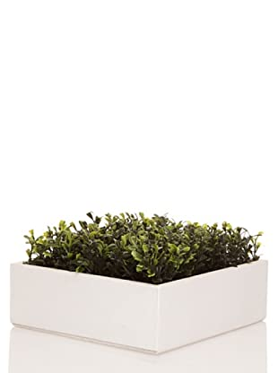 Concoral Concobox Mini Boxwood