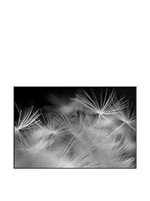 Beauty Dandelion Photography On Mounted Metal