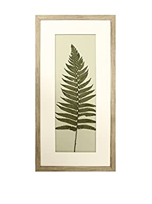 Star Creations Double Matted Fern Shadowbox Art