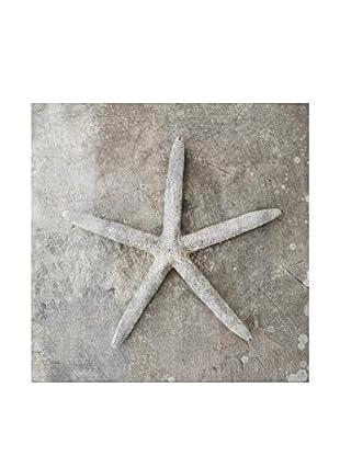 NOORMAL Leinwandbild Seashells 1