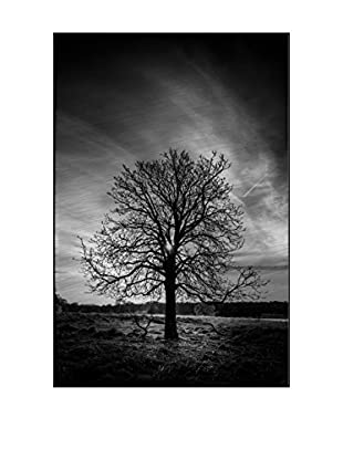 Leafless Tree Photography On Mounted Metal