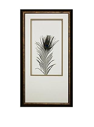 Star Creations Peacock Feather Shadowbox Art