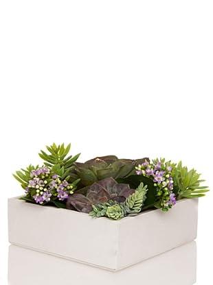 Concoral Composición Compo 3 Cactus