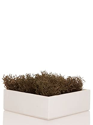 Concoral Concobox Alga